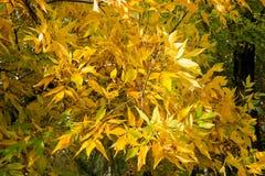 Textura colorida das folhas no outono Imagem de Stock