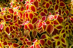 Textura colorida de las flores Imagen de archivo libre de regalías