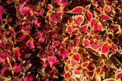 Textura colorida de las flores Fotos de archivo