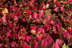 Textura colorida de las flores Foto de archivo