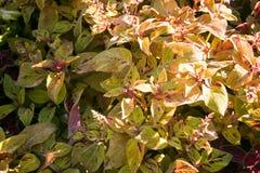 Textura colorida de las flores Fotografía de archivo