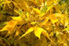 Textura colorida de las hojas en otoño Fotos de archivo