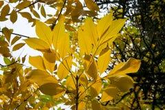 Textura colorida de las hojas en otoño Imágenes de archivo libres de regalías