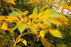 Textura colorida de las hojas en otoño Fotografía de archivo libre de regalías