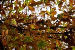 Textura colorida de las hojas en otoño Foto de archivo libre de regalías