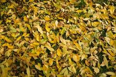 Textura colorida de las hojas en otoño Foto de archivo