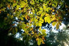 Textura colorida de las hojas en otoño Imagenes de archivo