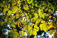 Textura colorida de las hojas en otoño Imagen de archivo libre de regalías