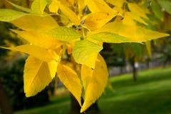 Textura colorida de las hojas en otoño Fotografía de archivo