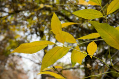 Textura colorida de las hojas en otoño Fotos de archivo libres de regalías