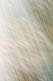 Textura colorida del pergamino Fotografía de archivo