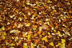 Textura colorida do fundo das folhas de outono Imagem de Stock
