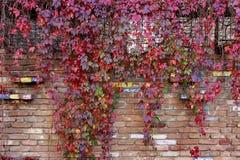 Textura colorida do macro da parede das folhas de outono imagens de stock