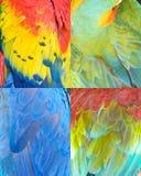 Textura colorida do teste padrão da coleção das penas de pássaro Imagem de Stock Royalty Free