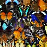 Textura colorida exótica del fondo hecha de butterfli de la compilación Imágenes de archivo libres de regalías