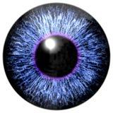 Textura colorida realista del iris del ojo Fotografía de archivo