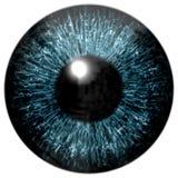 Textura colorida realista del iris del ojo Imagen de archivo