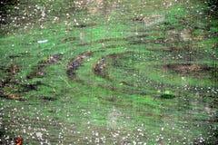 Textura colorida verde de madera de Unuque Imágenes de archivo libres de regalías
