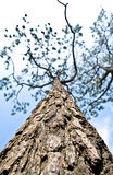Textura con el árbol Foto de archivo