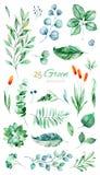 Textura con verde, suculento, hojas, hojas tropicales, follaje ilustración del vector