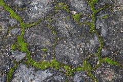 Textura concreta del musgo Imagen de archivo