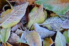 Textura congelada das folhas Fotografia de Stock