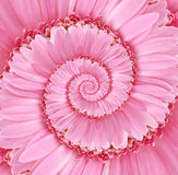Textura cor-de-rosa do fundo da flor da espiral de Droste Fotos de Stock