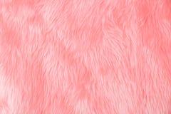 Textura cor-de-rosa de lãs Foto de Stock Royalty Free