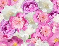 Textura cor-de-rosa SEM EMENDA da flor branca Teste padrão da peônia Foto de Stock Royalty Free