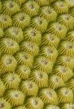 Textura coral Imagens de Stock