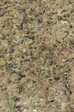 Textura coral Fotos de Stock
