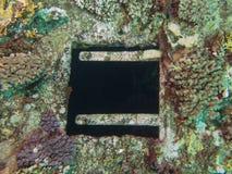 Textura coralina en ruina de la nave con una ventana Imagenes de archivo