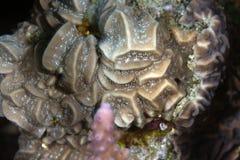 Textura coralina encontrada en el Mar Rojo. Fotos de archivo