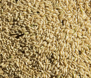 Textura cru do arroz Fotografia de Stock Royalty Free