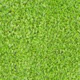 Textura cuadrada inconsútil - musgo verde Fotografía de archivo