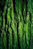 Textura cubierta de musgo verde de la corteza de árbol Imagen de archivo libre de regalías
