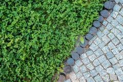Textura curto do pavimento do gramado e da pedra da grama Imagem de Stock
