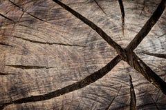 Textura cutted tronco imágenes de archivo libres de regalías