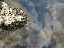 Textura da água Imagens de Stock
