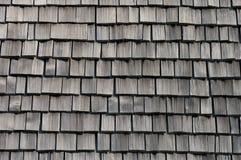A textura da árvore. imagens de stock