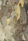 Textura da árvore Fotografia de Stock Royalty Free