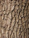 Textura da árvore Imagem de Stock