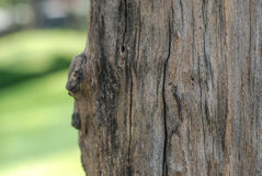 Textura da árvore Imagens de Stock