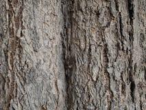 A textura da árvore Imagens de Stock Royalty Free