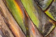 Textura da árvore de banana fotos de stock