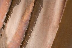 Textura da árvore de banana foto de stock
