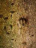 Textura da árvore de casca ilustração do vetor