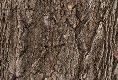 Textura da árvore de casca Fotografia de Stock