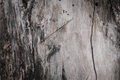 Textura da árvore de casca Fotos de Stock