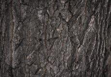 Textura da árvore de casca Imagem de Stock Royalty Free